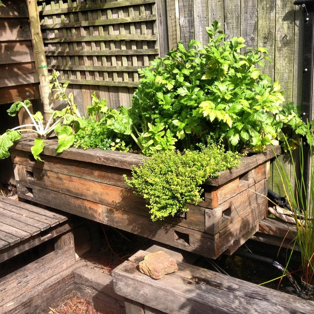 Aquaponics veggie bed