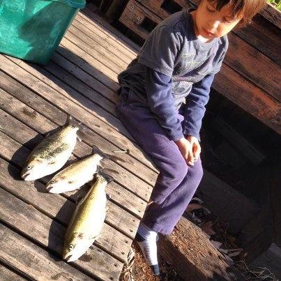 Home grown trout! Huzzah.