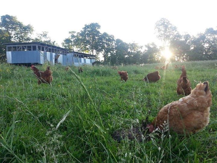 Eggmobiles in the dawn light...