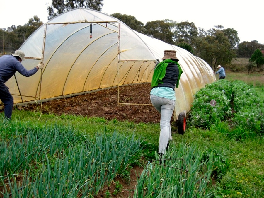 1309 movable greenhouse - 09