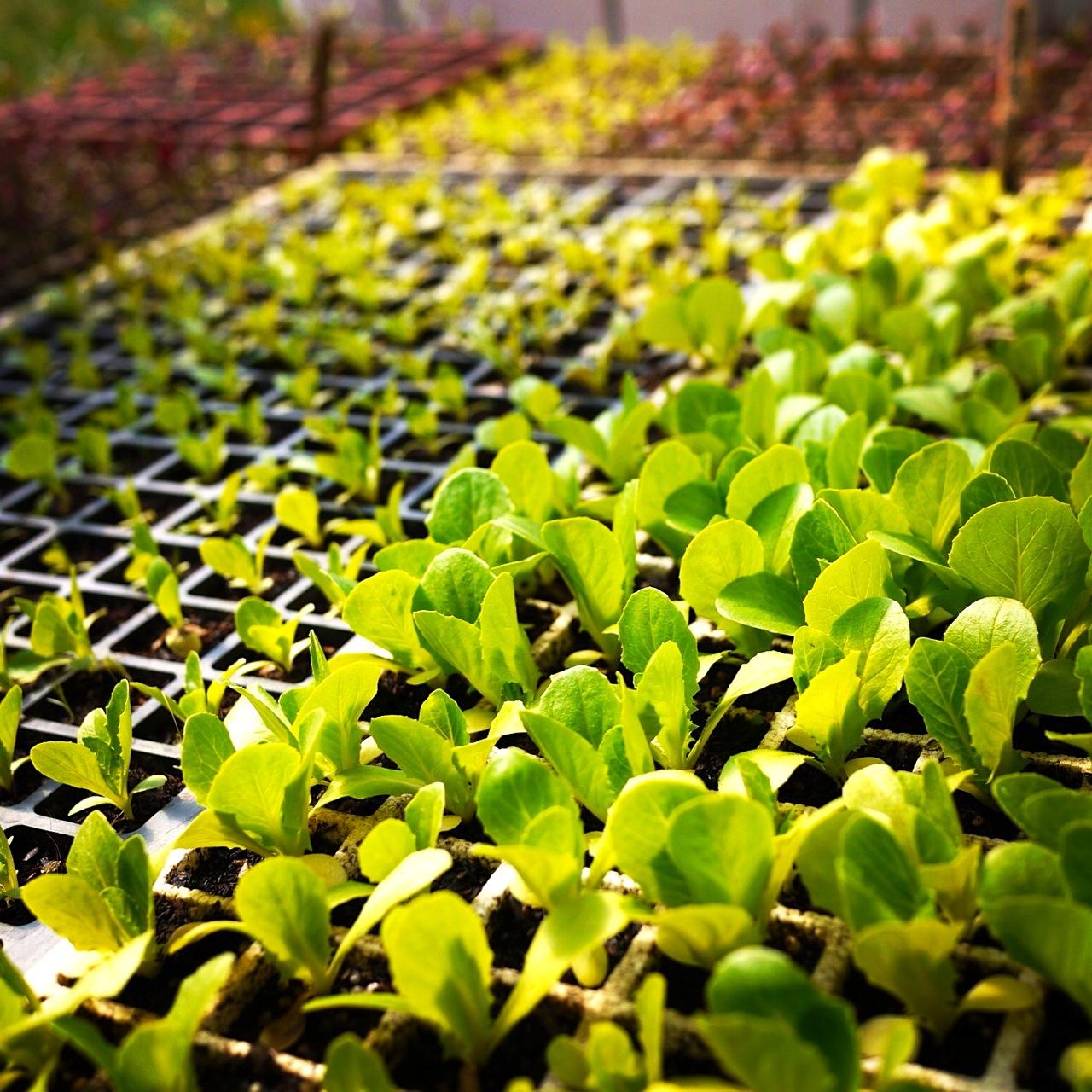 1309 seedlings - 1