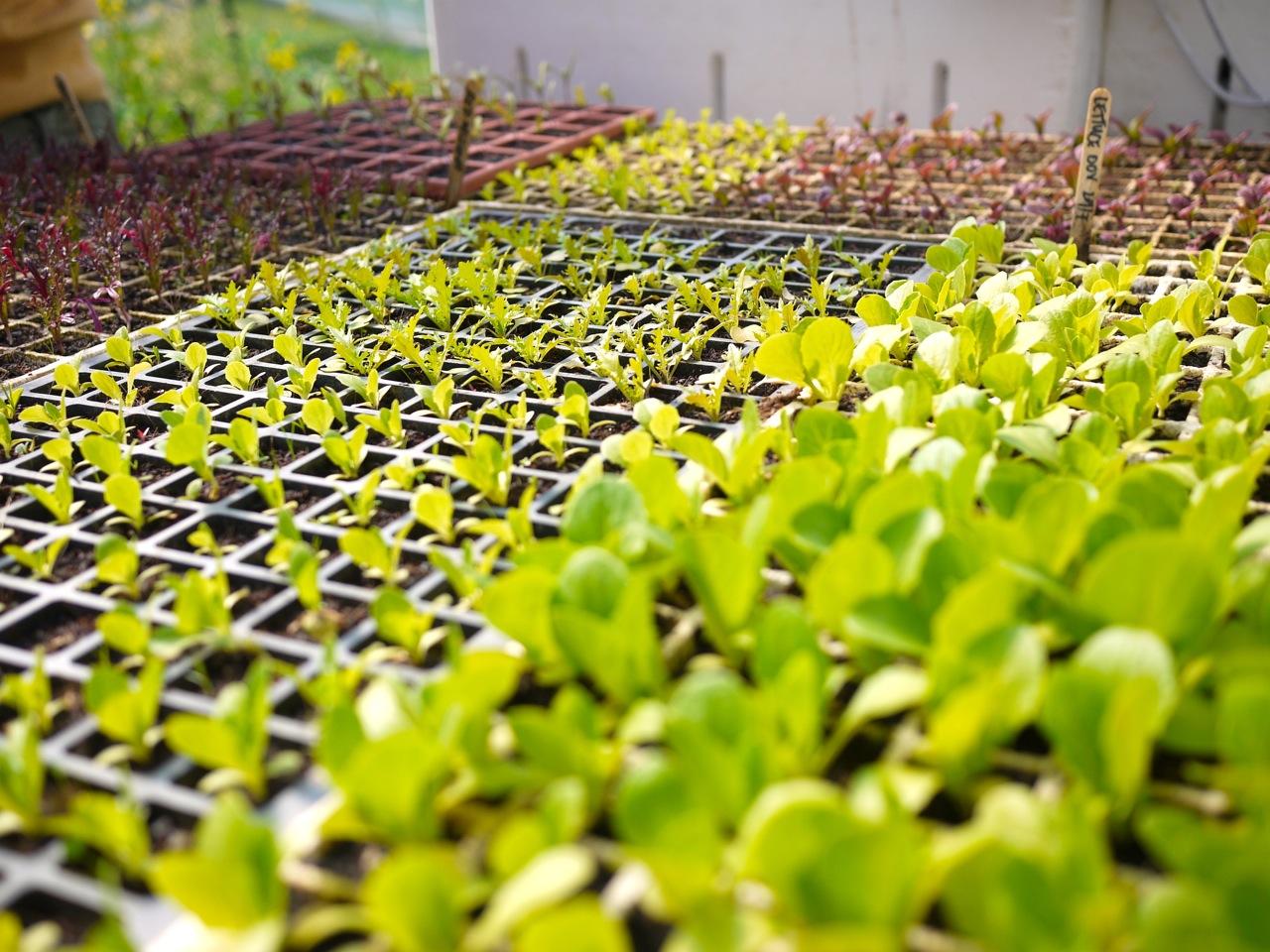 1309 seedlings - 3