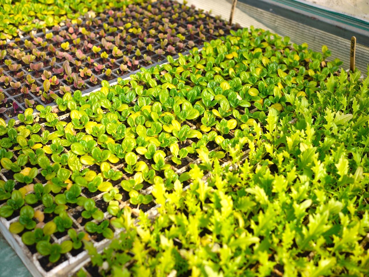 1309 seedlings - 6