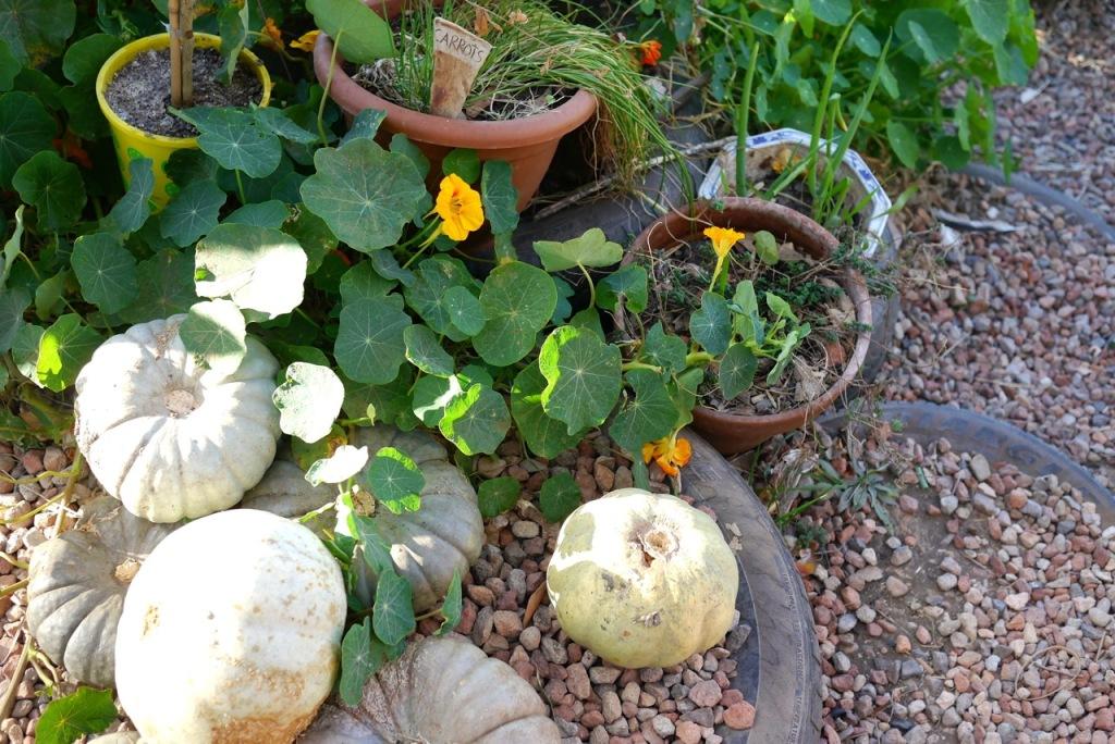 1410 visiting autumn farm - 03
