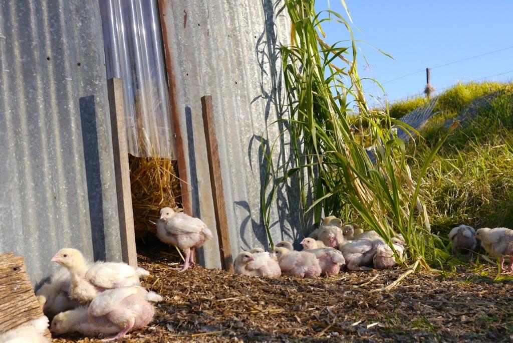 1410 visiting autumn farm - 10