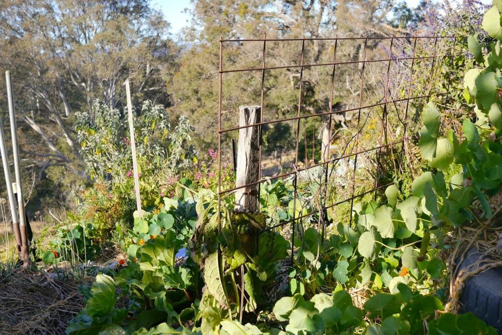 1410 visiting autumn farm - 14