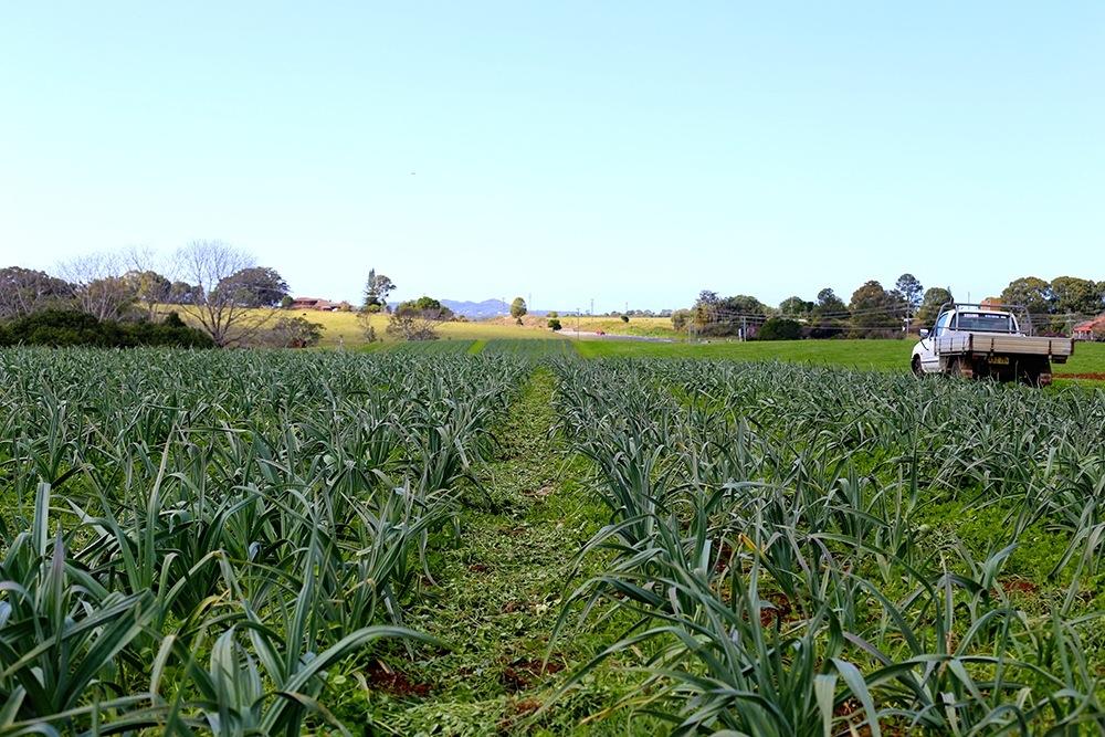 1411 The Farm - 03