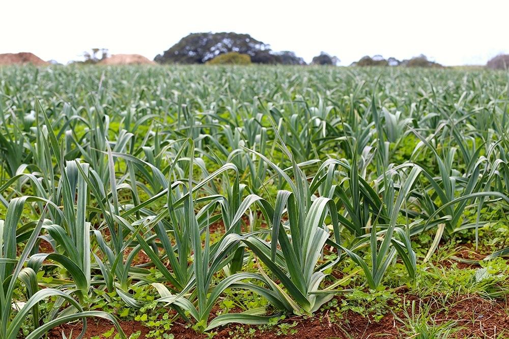 1411 The Farm - 07
