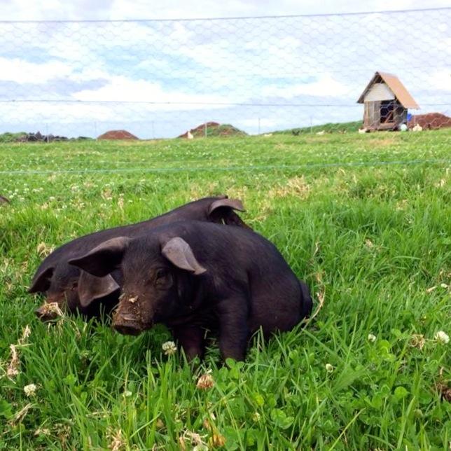 1411 The Farm - 16