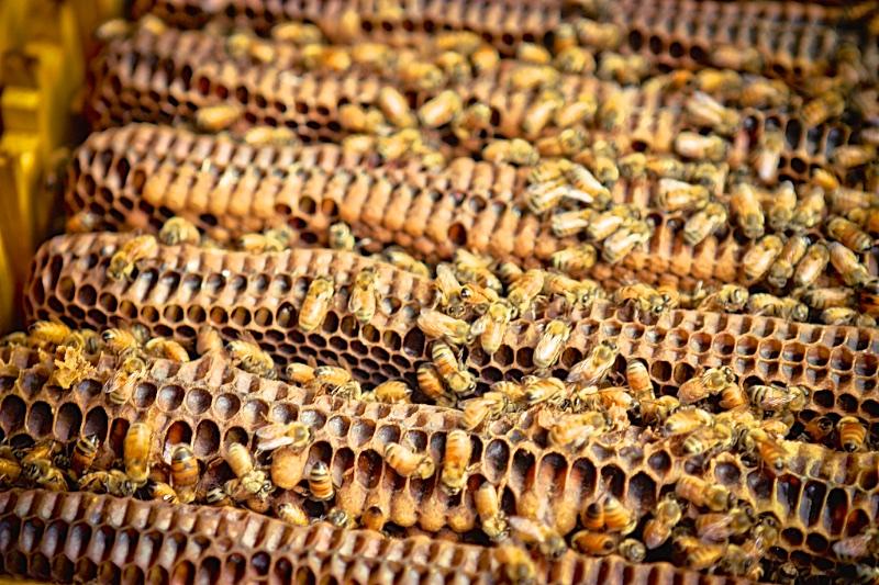 flow hive response 056