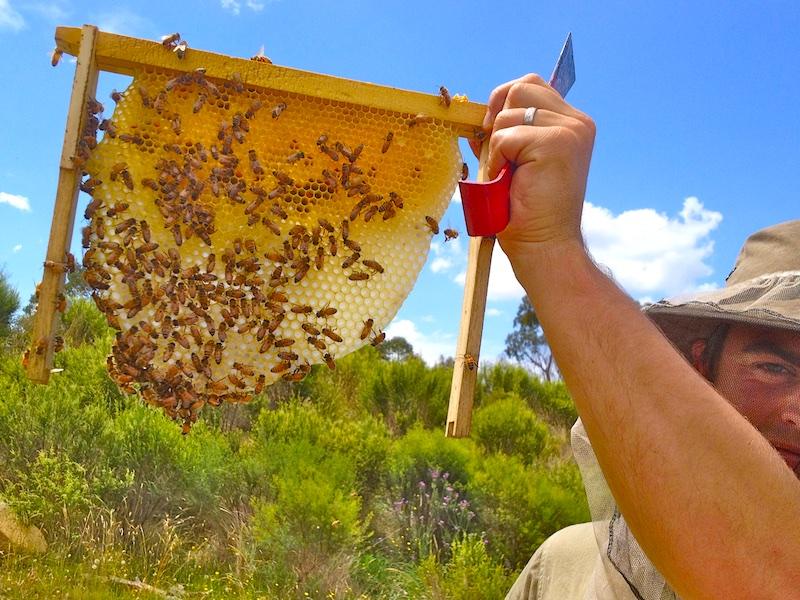 flow hive response 057