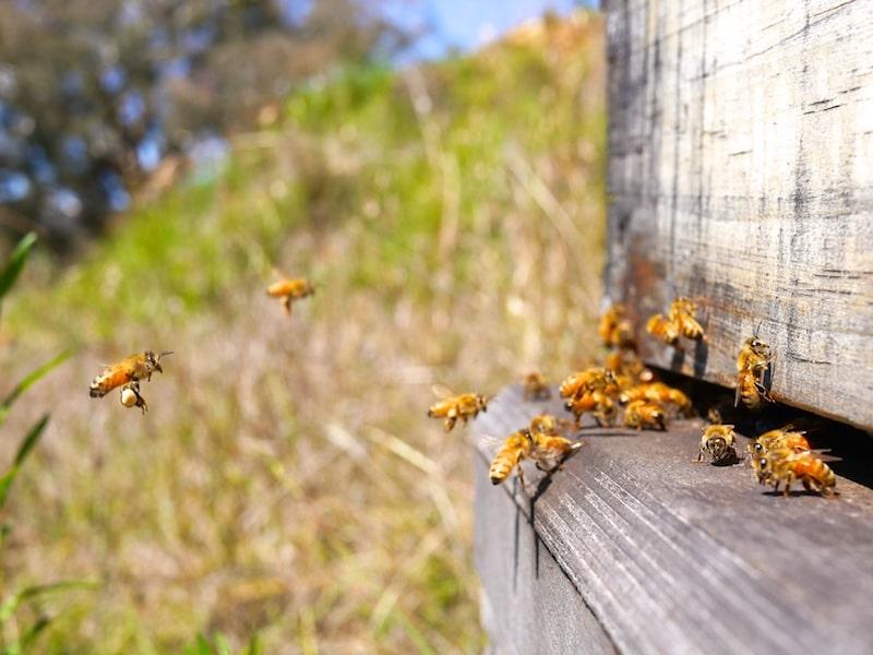 flow hive response 058