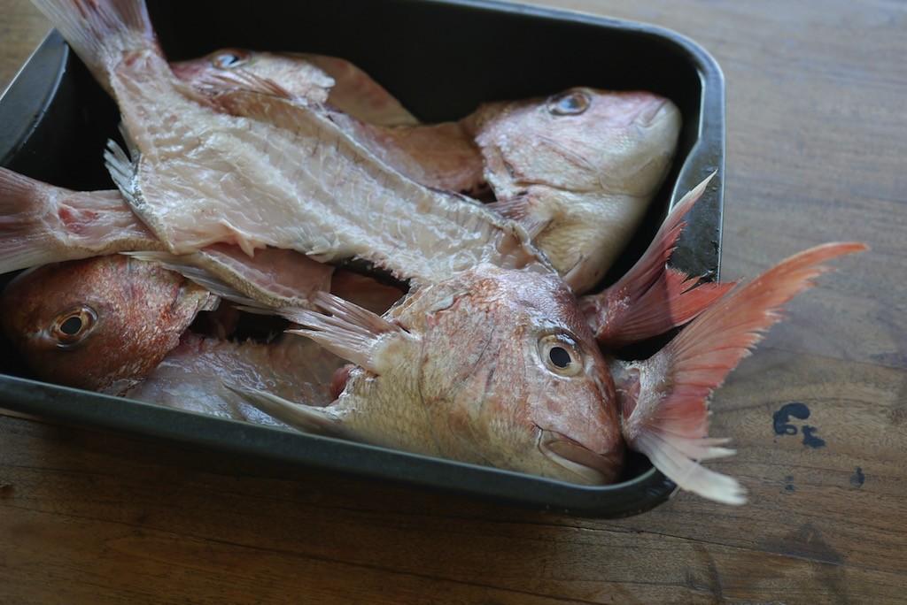 fish terrine 679