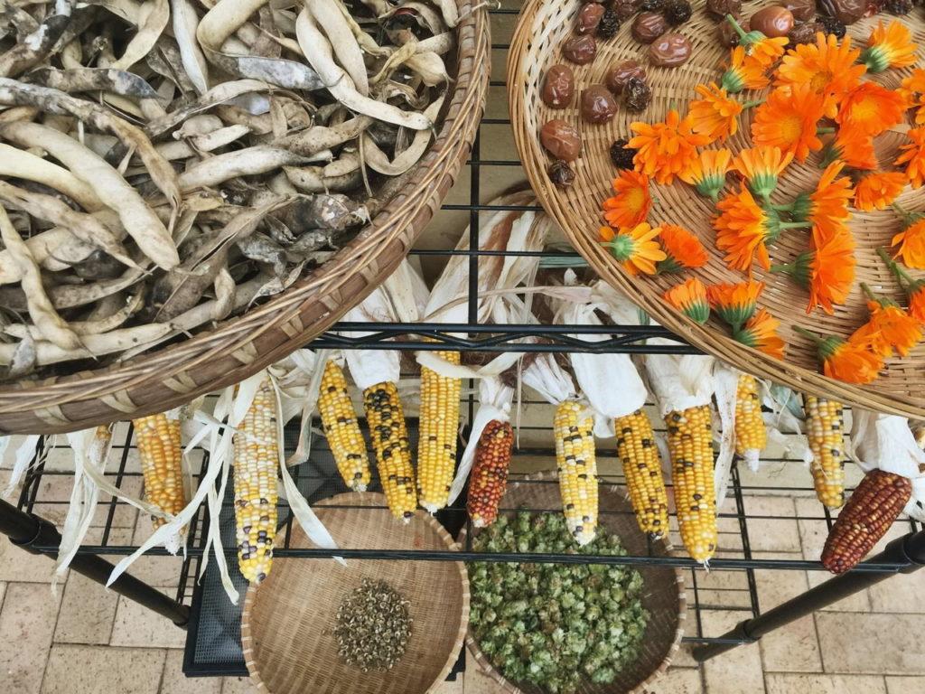 Seed saving basics