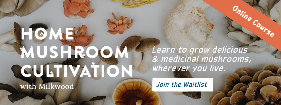 Home Mushroom Cultivation - join the waitlist